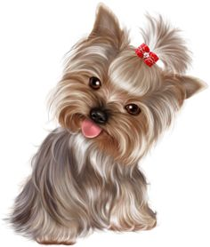 All About The Affectionate Yorkshire Terrier Dogs Yorkshire Terriers, Cute Animal Drawings, Cute Drawings, Yorkies, Perro Papillon, Cute Puppies, Cute Dogs, Poodle Puppies, Puppy Images