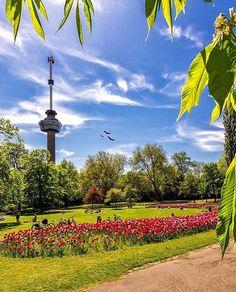 Rotterdam, Marcel, Cn Tower, Golf Courses, Park, Building, Pictures, Instagram, Rain