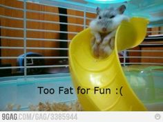 poor little hamster