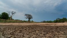 A static timelapse of a dry, cracked river bed (Limpopo River) desperately waiting for rain as the storm clouds and thunder are building up. Storm Clouds, Hd Video, Thunder, Stock Footage, Waiting, Africa, Rain, Country Roads, Trees