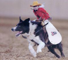 Cowboy Monkey Dog Jockey