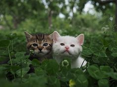 Two different kittens spying on something.