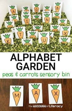 Springtime Peas and Carrots Alphabet Sensory Bin - FREE Printables! Spring is in the air with this hands on peas and carrots alphabet sensory bin! Match letters, work on names, or build words with these printable letters. April Preschool, Preschool Garden, Kindergarten Literacy, Preschool Crafts, Preschool Themes, Preschool Printables, Early Literacy, Sensory Bins, Literacy Activities