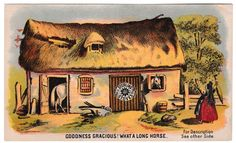 Sterling Stoves Goodness Gracious What a Long Horse Humor Advertising Card