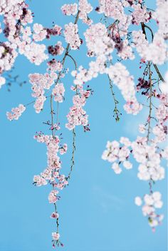 55 new Ideas flowers wallpaper iphone photography cherry blossoms Flowers Nature, Beautiful Flowers, Pink Flowers, Flower Wallpaper, Iphone Wallpaper, Iphone Photography, New Wall, Graphic, Pretty Pictures