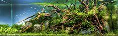 The Nature Aquarium Style | Aquascaping Love