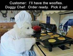 20 Funny Animal Pictures OF The Day #funny #picture