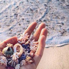 Treasures in the ocean summer beach, beach day, summer fun, ocean beach,