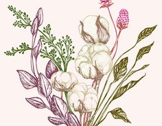 """Check out new work on my @Behance portfolio: """"Cotton bouquet"""" http://be.net/gallery/46954903/Cotton-bouquet"""