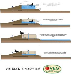 1000 images about duck pens on pinterest duck pond for Duck pond filtration