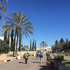 """@inquisitoraura's photo: """"Gotta love these blue #socal skies. #sdsu #sandiego #itsalwaysummerhere"""""""