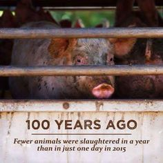 100 years ago fewer animals were slaughtered in a year than in just one day in 2015 #vegan