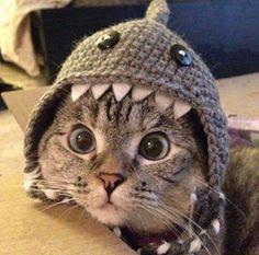 crafty-cats-corner: CROCHET CAT'S EAR WARMER