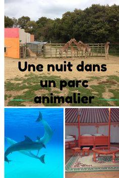 Virée nocturne: une nuit à Planète Sauvage, le parc animalier safari en France; alors, passerez vous la nuit en yourte ou en tente Tanzanienne?