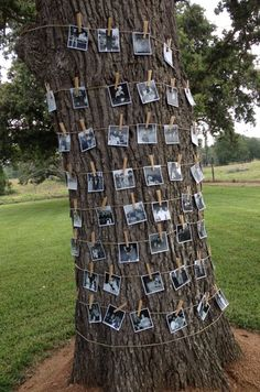 Super easy way to show off photos while also decorating the tree in the back yard! Pray for good weather.
