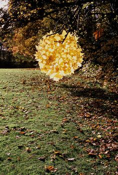 leaves stuck together pretty cool idea who would have thought of that but the awesome  Andy Goldworthy