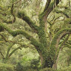 Eden Gardens State Park ~ Florida