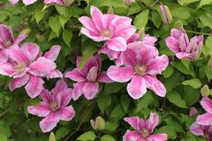 Top 9 Most Beautiful Flowers For Hanging Baskets