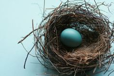Natural art - pretty nests - some are sad. http://www.photographyblogger.net/17-pretty-pictures-of-birds-nests/