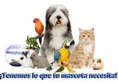 https://www.facebook.com/semilleriareyes/photos/a.514813321950285.1073741828.514793368618947/978830585548554 ¡Tenemos lo que tu mascota necesita!  SEMILLERÍA REYES facebook.com/semilleriareyes C/ Baldomero Muñoz, 72 - Umbrete Tfno. 955 715 249 #Umbrete ¡Síguenos también en nuestra Propia Red Social! http://redsocial.globalum.es/grupos/semilleria-reyes  Promocionado por Globalum. Marketing en Redes Sociales facebook.com/globalumspain