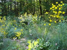 michigan wildflowers | Native Plantings in WAM Member's Front Yard (formerly turfgrass)