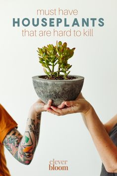 If you're looking for houseplants that are hard to kill, look no further! Check out these must have houseplants by Clever Bloom. #houseplants #hardtokillplants Perfect Plants, Cool Plants, Indoor Floor Plants, Planting Succulents, Planting Flowers, Ficus Elastica, Rubber Plant, Crassula Ovata, Jade Plants