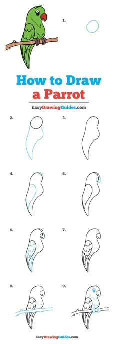 Learn How to Draw a Parrot: Easy Step-by-Step Drawing Tutorial for Kids and Beginners. #Parrot #DrawingTutorial #EasyDrawing See the full tutorial at https://easydrawingguides.com/how-to-draw-a-parrot/.