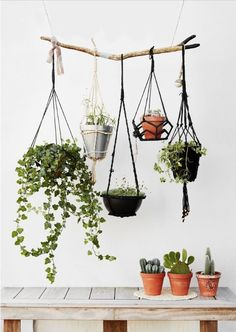 ** Madam Stoltz Blumenampel schwarz rund… – Home Decor Wholesalers Hanging Planters, Hanging Baskets, Indoor Garden, Indoor Plants, Decoration Plante, Plants Are Friends, Green Life, Green Plants, Plant Decor