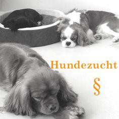 Hundezucht Anwalt Hunderecht #Ackenheil #Tieranwalt http://www.der-tieranwalt.de bundesweite Rechtsberatung kostenlose Ersteinschätzung