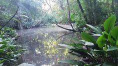 Um passeio pelo Parque Alfredo Volpi - uma pérola remanescente de Mata Atlântica em meio ao caos.