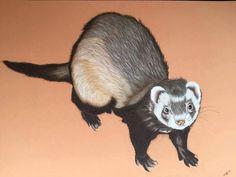 Portrait de furet Portrait d'animaux Artiste Animalier  La Galerie de Julie