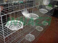 Pigeon Cage, Pigeon Cage direct from Anping County Innaer Wire Mesh Manufacturing Co. in China (Mainland) Pigeon Cage, Poultry Cage, Low Carbon, Wire Mesh, Drinking Water, Survival, Layers, Management, Surface