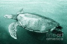 Andrew Bret Wallis - Green Turtle Surfacing