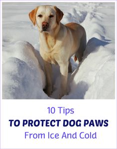 Worried about your dog's paws? Freezing cold and harsh winter elements can injure your canine's feet. So what can be done to protect their pads during walks and playtime in cold weather? Here are 10 tips to protect your dog from freezing paws this winter.