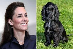 """Lupo, the Royal Dog ~ The Duke & Duchess of Cambridge adopted a black, male, cocker spaniel puppy in late 2011; Lupo, which means 'wolf' in Italian, was part of a litter belonging to Ella, a cocker spaniel owned by Kate's parents. Although the royal family's official website doesn't include any info about him, Lupocambridge.com, purports """"Things we know & things WE think we know about Lupo Cambridge."""" It's unclear who is behind the site. (read more...)"""