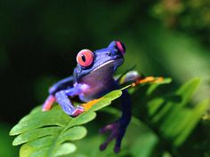 a purple frog! My kindergarten teacher got mad at me...I was just a visionary! lol