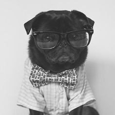 It's a tie on kind of Tuesday! #thepugdiary #tot