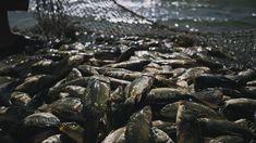 Jésus a dit que le royaume des cieux est encore semblable à un filet jeté dans la mer et ramassant des poissons de toute espèce.... End Of The Age, Kingdom Of Heaven, Filets, Jesus Quotes, Ciel, Angel