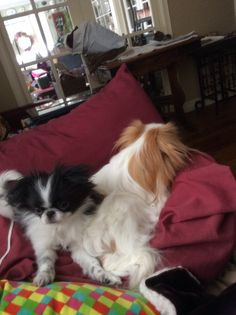 Koshi :) Aiko, Puppies, Dogs, Animals, Animales, Puppys, Animaux, Pet Dogs, Doggies