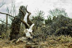 Kudu scul by Gerda Crouse on 500px