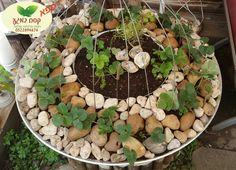 אדנית אקוופונית #תותשדה #ספא_במרכז אורגני ואקולוגי