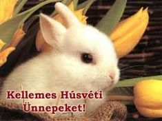 Pembroke Welsh Corgi - Alert and Affectionate Funny Easter Pictures, Happy Easter Wallpaper, Holland Lop Bunnies, Corgi Facts, Cute Corgi Puppy, Pembroke Welsh Corgi Puppies, Rabbit Breeds, Bunny Images, Bunnies