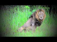 Safaris in Kruger National Park