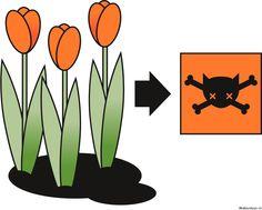Leider sind sehr viele der schönen Frühlingsblumen für Katzen giftig.  http://katzentipps.ch/fuer-katzen-giftige-pflanzen/