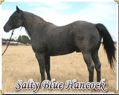 leo blue hancock | Leo Blue Hancock Quarter Horse
