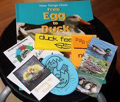 Make way for Ducklings - Ducks Lapbook (1+1+1)