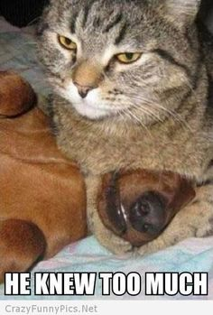 This is why our dog is in the house and all cats remain outside!!!  The cats can not be trusted!!!!!!