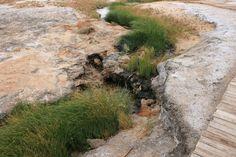 South Australia Desert Spring