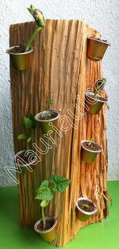 Mauriquices: Semente, sementinha...