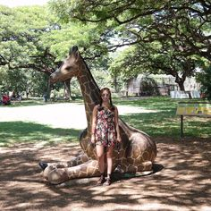Instagram의 @kimssors님: #하와이 #호놀룰루 #와이키키 #여행 #해외여행 #호놀룰루동물원 #동물원 #덥다 더워서 동물들이 잠만자 살이 점점 늘어나는구나아